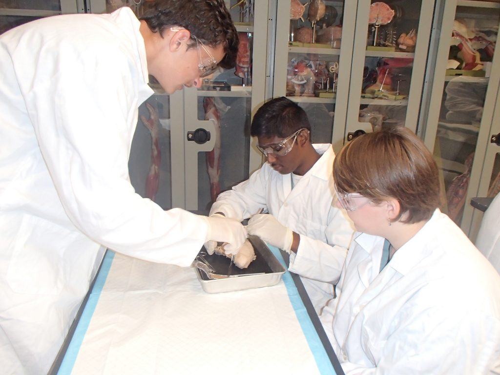 Three campers dissecting a bull testicle in the lab