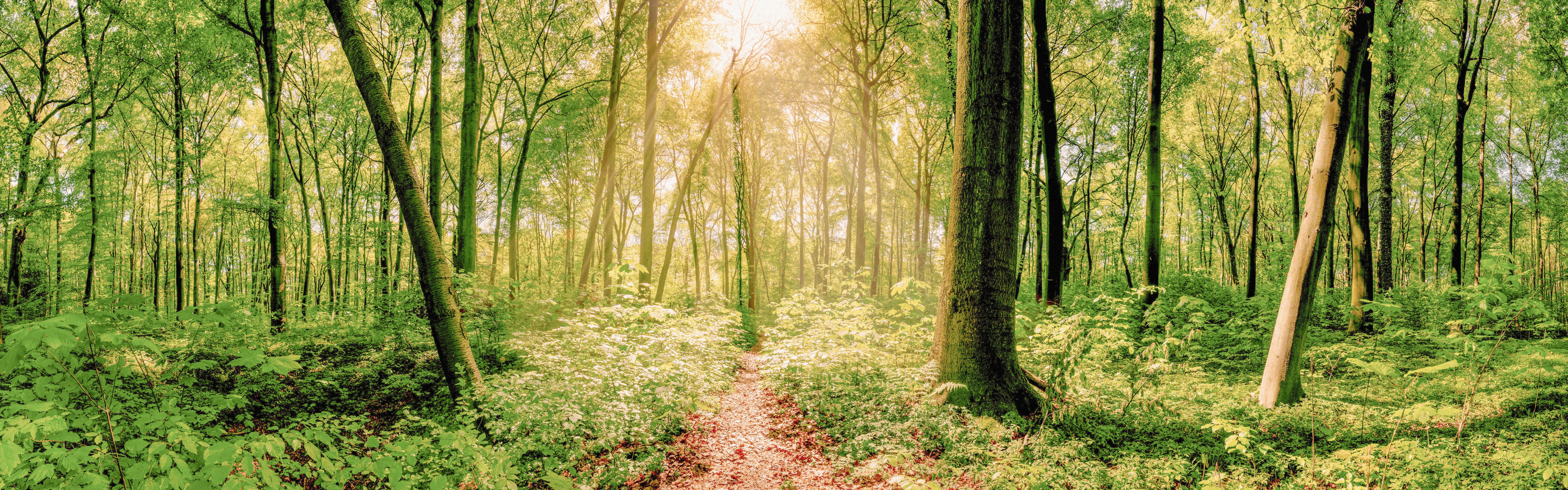Photo of a trail through a flourishing forest, with the sun peeking through the trees.