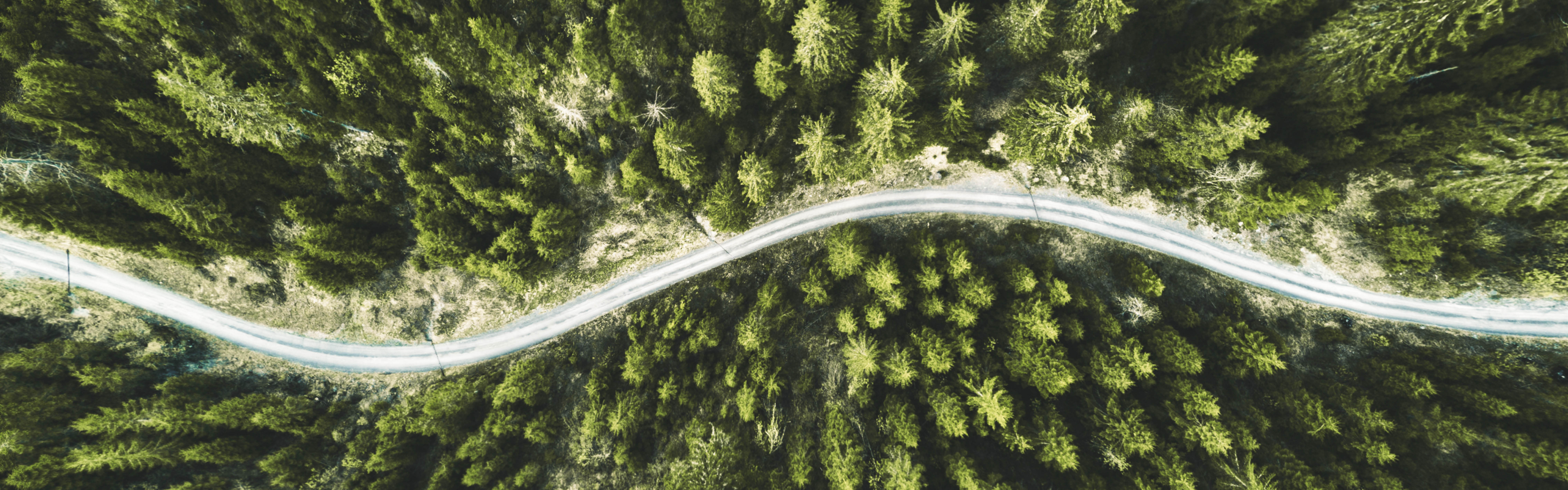 Aerial view of trees with a rural road winding through the tall pine trees.